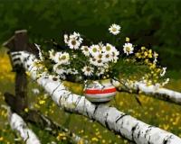 Картины по номерам 40х50 Букет ромашек на изгороди