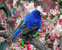 Картины по номерам 40х50 Птица в саду