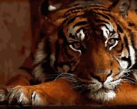 Картины по номерам 40х50 Красавец тигр