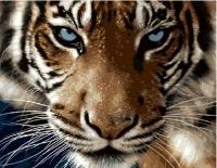 Картины по номерам 40х50 Взгляд тигра (GX 8767)