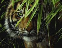 Картины по номерам 40х50 Тигр на охоте